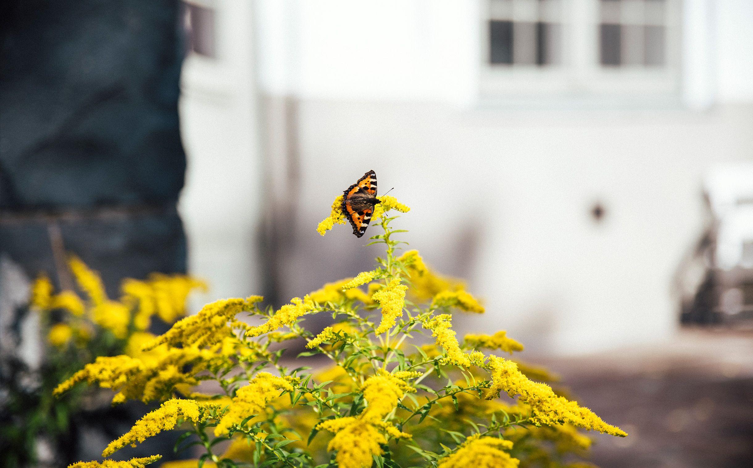 Sommerfugl på busk
